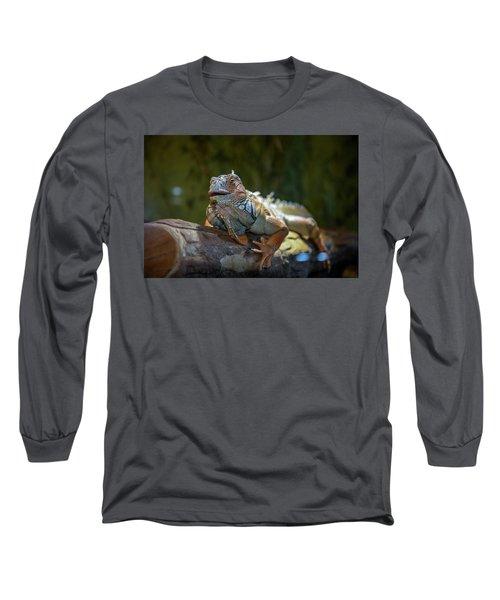 Snoozing Iguana Long Sleeve T-Shirt by Martina Thompson