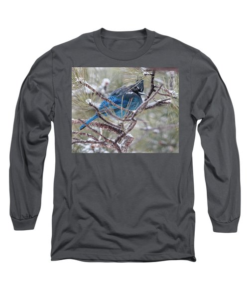 Snowy Bluejay  Long Sleeve T-Shirt