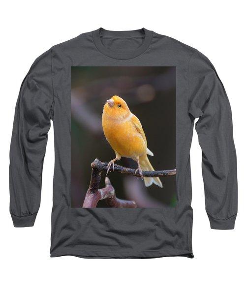 Spanish Timbrado Canary Long Sleeve T-Shirt