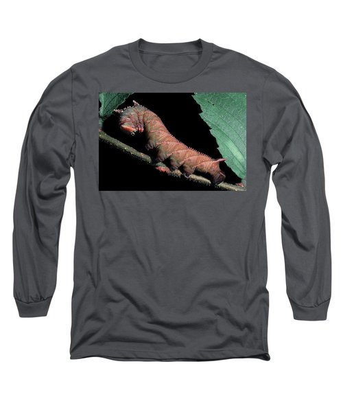 Sphinx Moth Caterpillar Long Sleeve T-Shirt