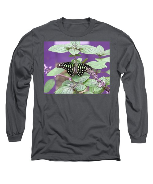 Tailed Jay Butterfly In Puple Long Sleeve T-Shirt