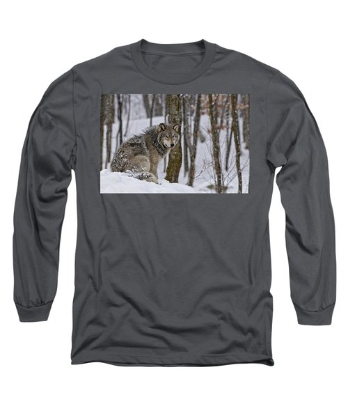 Long Sleeve T-Shirt featuring the photograph Timber Wolf In Winter by Michael Cummings