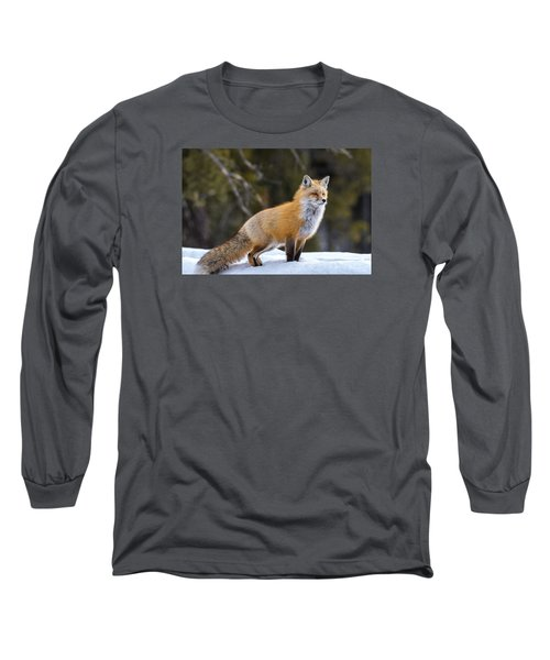 Long Sleeve T-Shirt featuring the photograph Totally Foxy by Yeates Photography