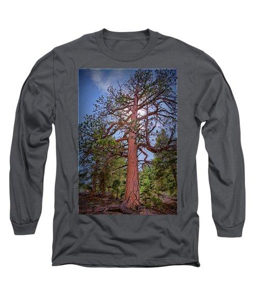 Tree Cali Long Sleeve T-Shirt