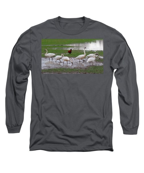 Trumpeter Swans And Rooster Long Sleeve T-Shirt by Karen Molenaar Terrell