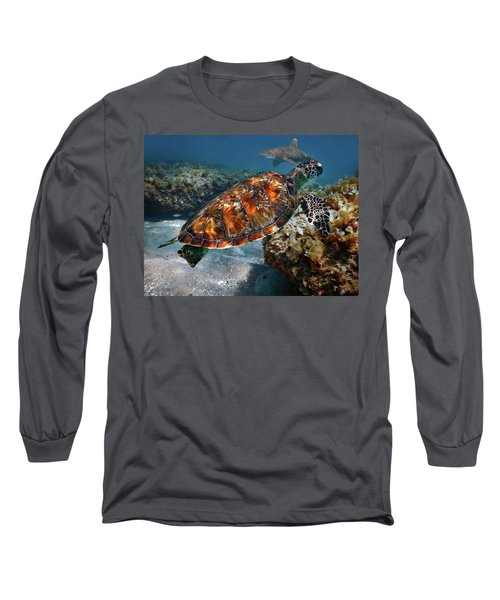 Turtle And Shark Swimming At Ocean Reef Park On Singer Island Florida Long Sleeve T-Shirt by Justin Kelefas