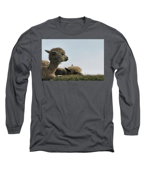 Two Alpaca Long Sleeve T-Shirt by Pat Cook