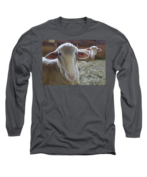 Two Funny Sheep In A Barn Long Sleeve T-Shirt