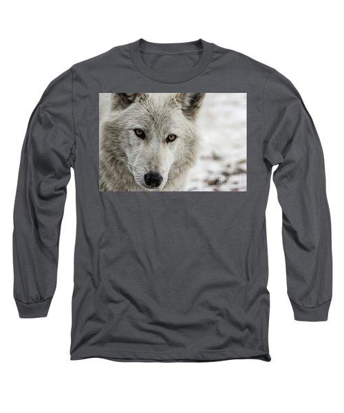 White Wolf II Long Sleeve T-Shirt by Brad Allen Fine Art