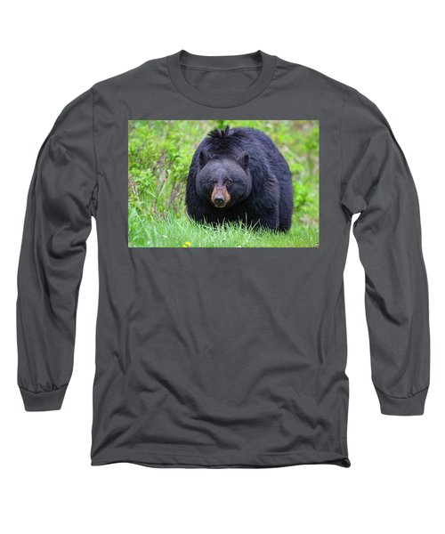 Wild Black Bear Long Sleeve T-Shirt