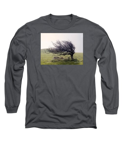 Windswept Tree Long Sleeve T-Shirt