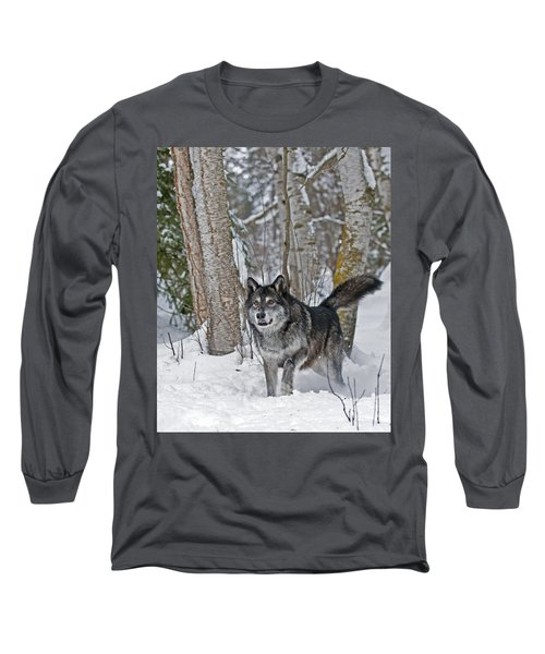 Wolf In Trees Long Sleeve T-Shirt