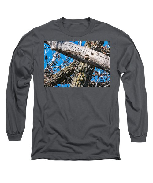 Yellow-shafted Northern Flicker Nest Building Long Sleeve T-Shirt by Edward Peterson