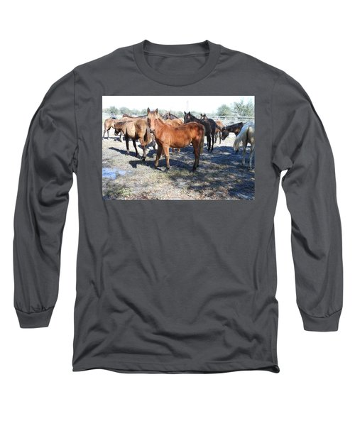 Young Cracker Horses Long Sleeve T-Shirt by Kay Gilley