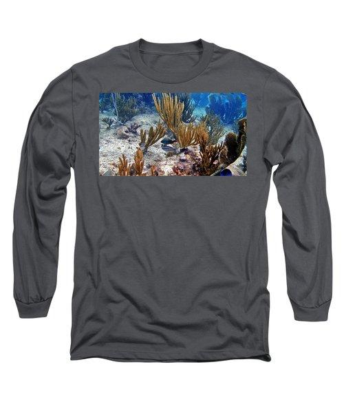Gorgonian Parrotfish Long Sleeve T-Shirt