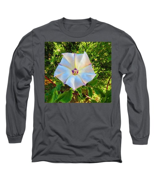 Long Sleeve T-Shirt featuring the photograph Sacred Datura In The Golden Hour by Judy Kennedy