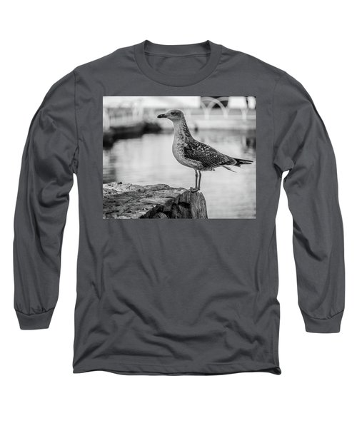 Young Seagull Long Sleeve T-Shirt