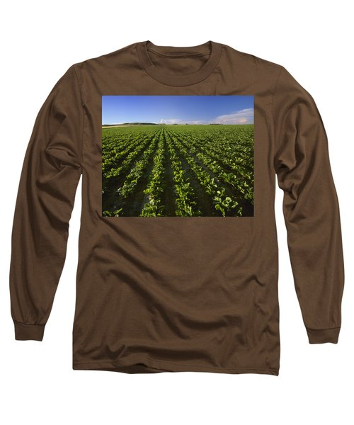 Agriculture - Field Of Maturing Sugar Long Sleeve T-Shirt