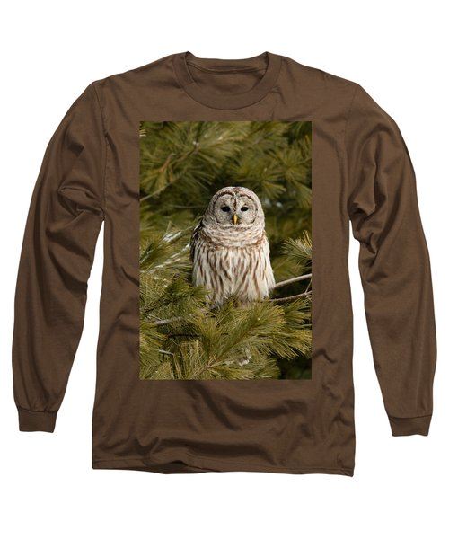 Barred Owl In A Pine Tree. Long Sleeve T-Shirt
