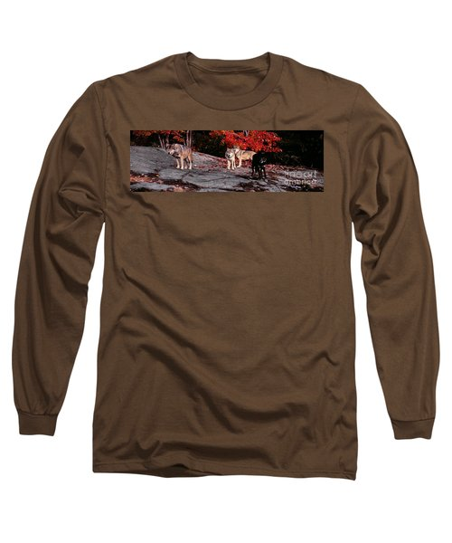 Timber Wolves Under A Red Maple Tree - Pano Long Sleeve T-Shirt