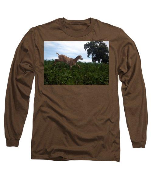 A Goat Walks Near A Monoculture Field Long Sleeve T-Shirt