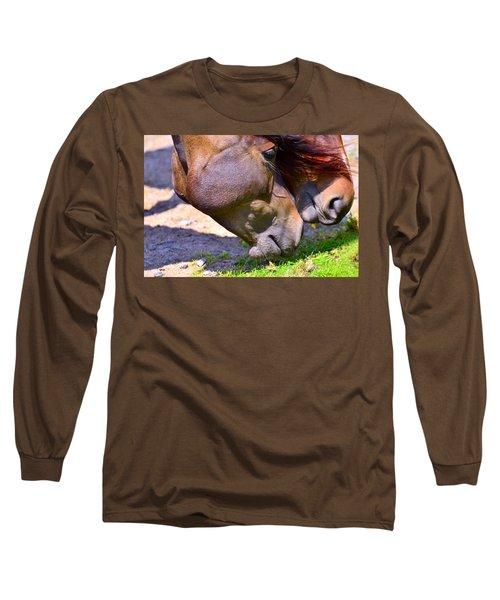 Arabian Horses Long Sleeve T-Shirt