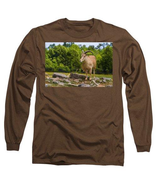 Barbary Sheep Long Sleeve T-Shirt