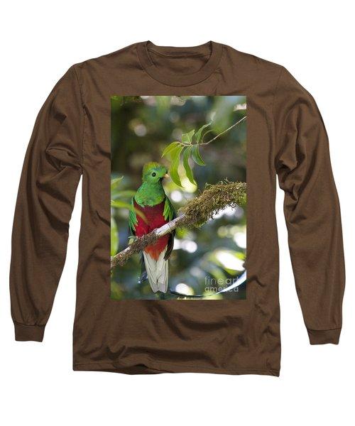 Beautiful Quetzal 1 Long Sleeve T-Shirt