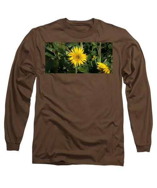 Bee On Sunflower, Baden-wurttemberg Long Sleeve T-Shirt
