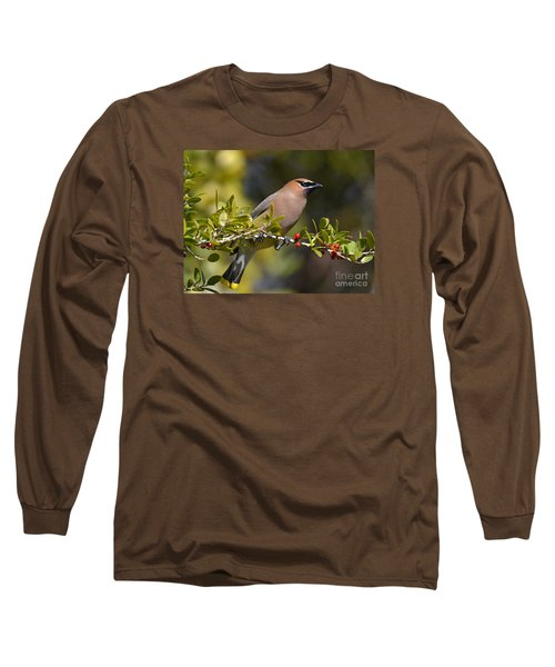 Long Sleeve T-Shirt featuring the photograph Cedar Waxwing And Red Berries by Kathy Baccari