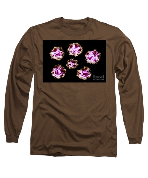 Chicory Pollen Grains Long Sleeve T-Shirt