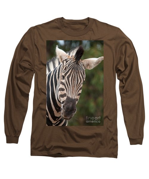Curious Zebra Long Sleeve T-Shirt by Ray Warren