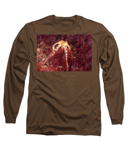 Daisy Brittle Star Spawning Long Sleeve T-Shirt