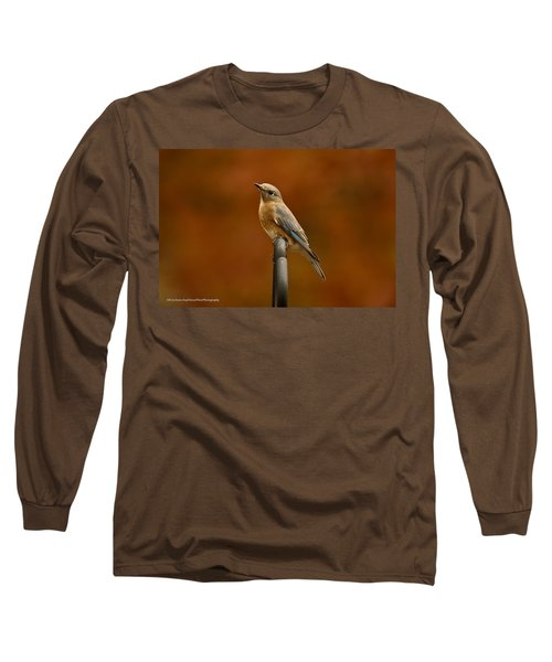 Long Sleeve T-Shirt featuring the photograph Female Bluebird by Robert L Jackson