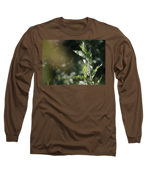 Field Sparrow Long Sleeve T-Shirt by Melinda Fawver