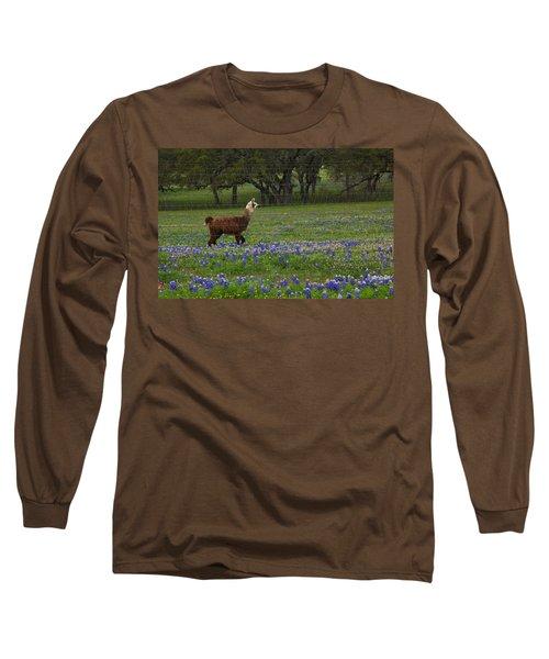 Llama In Bluebonnets Long Sleeve T-Shirt by Susan Rovira
