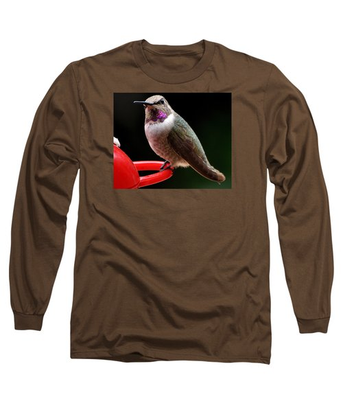 Long Sleeve T-Shirt featuring the photograph Pregnant Female Caliope With Purple Throat by Jay Milo