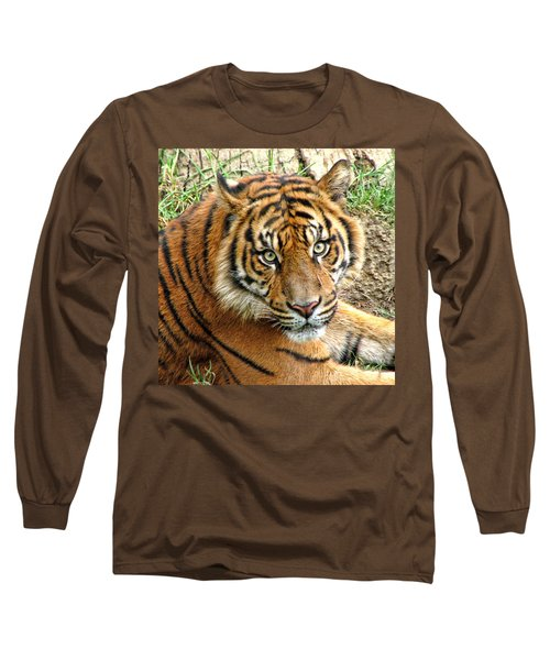 Staring Tiger Long Sleeve T-Shirt