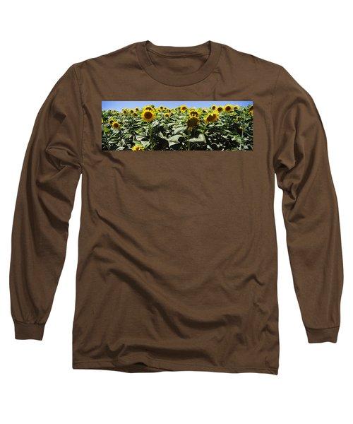 Sunflower Field, California, Usa Long Sleeve T-Shirt