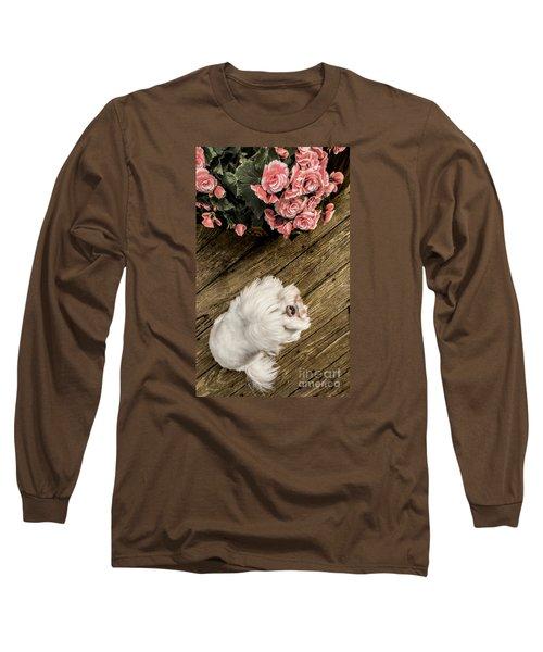 Havanese Puppy Long Sleeve T-Shirt