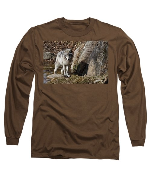 Long Sleeve T-Shirt featuring the photograph Timber Wolf In Pond by Wolves Only