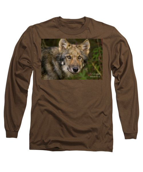Timber Wolf In Denali Long Sleeve T-Shirt