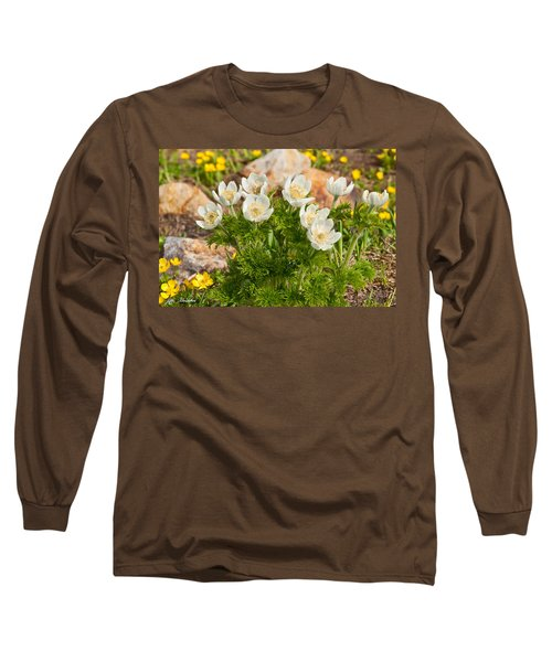 Western Pasqueflower And Buttercups Blooming In A Meadow Long Sleeve T-Shirt by Jeff Goulden