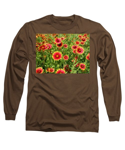 Long Sleeve T-Shirt featuring the photograph Wild Red Daisies #4 by Robert ONeil
