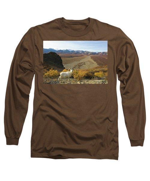 Dalls Sheep In Denali Long Sleeve T-Shirt