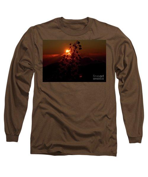Ahinahina - Silversword - Argyroxiphium Sandwicense - Sunrise Long Sleeve T-Shirt by Sharon Mau