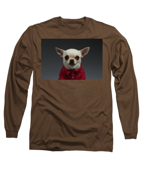 Closeup Portrait Chihuahua Dog In Stylish Clothes. Gray Background Long Sleeve T-Shirt