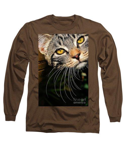 Curious Kitten Long Sleeve T-Shirt