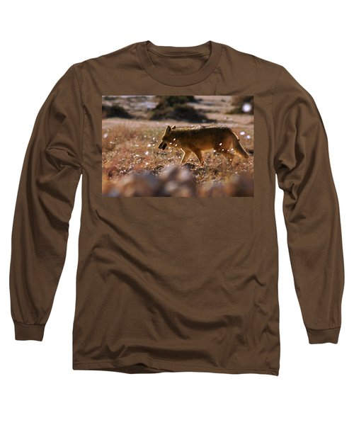 Long Sleeve T-Shirt featuring the photograph Death Valley Coyote And Flowers by Daniel Woodrum