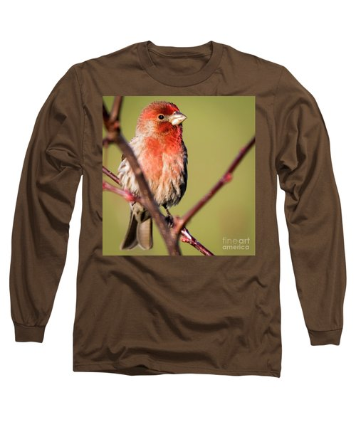 Long Sleeve T-Shirt featuring the photograph House Finch In Full Color by Ricky L Jones